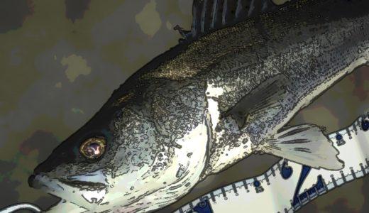 【今日も釣れない?】緩潮の旧江戸川短時間シーバス釣行