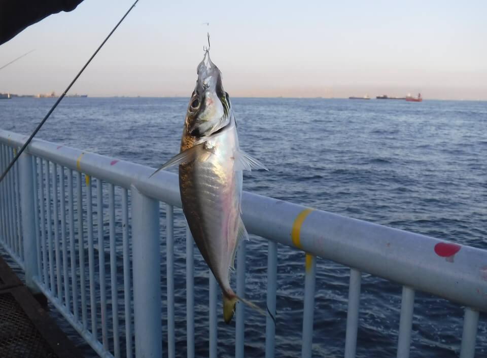 釣り 大黒ふ頭 横浜市鶴見区のおすすめ釣り場・穴場スポットはどこ?釣れる魚も場所ごとに紹介!