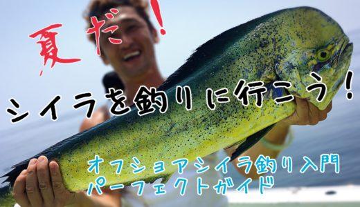 【シイラ釣りに行こう】オフショア初心者に贈る入門パーフェクトガイド(乗船方法/釣り方/タックル/厳選おすすめルアーも紹介)