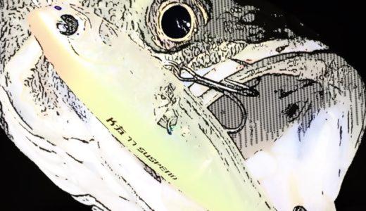 【夏ふたたび…】先日のプチ爆に味をしめての荒川下流域シーバス釣行