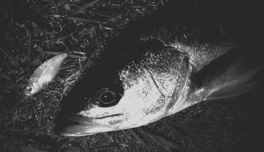 【中川下流域シーバス釣行】秋の明暗レンジ攻略が楽しすぎる