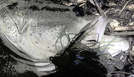【ライブの後はバス釣りに…】嵐の前夜の琵琶湖ブラックバス釣行