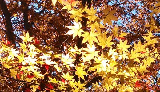 【2018奥日光の紅葉が見頃へ】中禅寺湖~竜頭の滝~湯ノ湖をドライブしてきました※10月10日現在の色づき状況