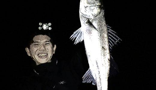 【秋爆!初心者に釣らせたい】荒川中川下流域夜通しシーバス釣行記