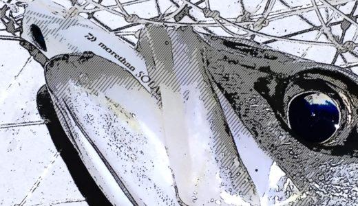 【ソラリア85Fが大活躍♪】深夜の中川下流域シーバス釣行