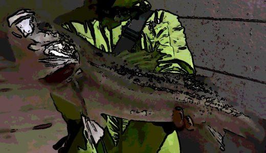 【中川バチ抜け釣行】貴重なボイルを狙い撃って良型シーバスゲット