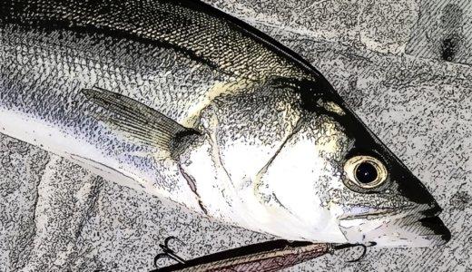 【隅田川シーバスねじりハチマキ一竿風月】SNSで繋がる釣り人の輪