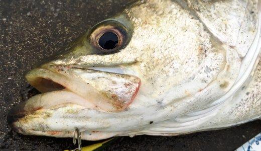 【お願いだから食べないで…】魚の気持ちになれば釣果は上がる?