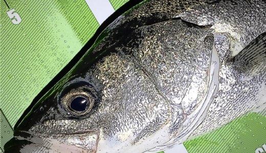 【隅田川シーバス釣行】過ぎ去りし春とクルバチパターン
